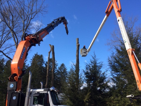Armonk Tree Removal