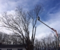 Premium Tree Services Available